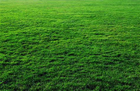 lawn grass seven free grass textures or lawn background images www myfreetextures com 1500 free