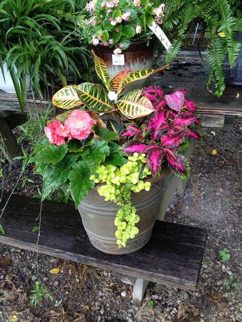 shade flowers for pots 26 best full shade flowers plants images on pinterest container flowers container plants and