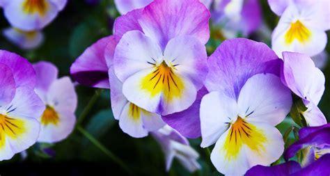 62 types of purple flowers proflowers blog