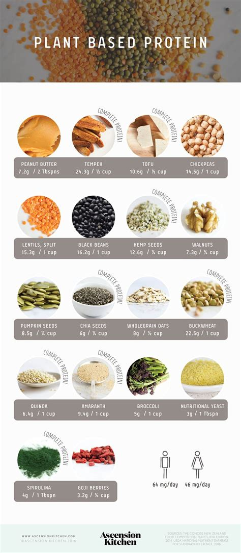 protein   plant based diet plant based  plants
