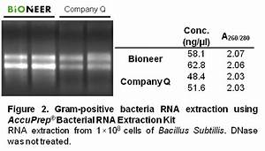 Accuprep U00ae Bacterial Rna Extraction Kit  50 Reactions