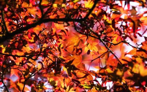 Fall Backgrounds Laptop by Fall Wallpapers Wallpaper Cave
