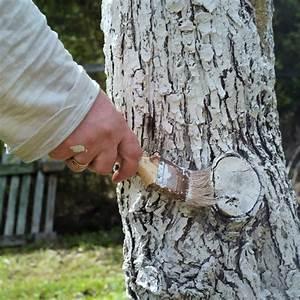 Mein Apfelbaum Anleitung : apfelbaum pflege apfelbaum apfel red love pflege seite 2 ~ Lizthompson.info Haus und Dekorationen