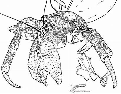 Crab Coloring Coconut Pages Drawing Giant Crustaceans