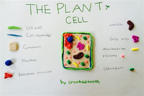 awesome easy   biology projects learn  blog