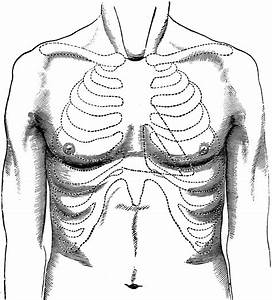 Surface Of Normal Chest