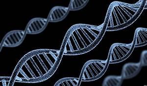 Human Gene Patentability Case Heads To Supreme Court