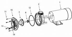 Pool Pumps  U0026 Parts   E Series Pump Parts
