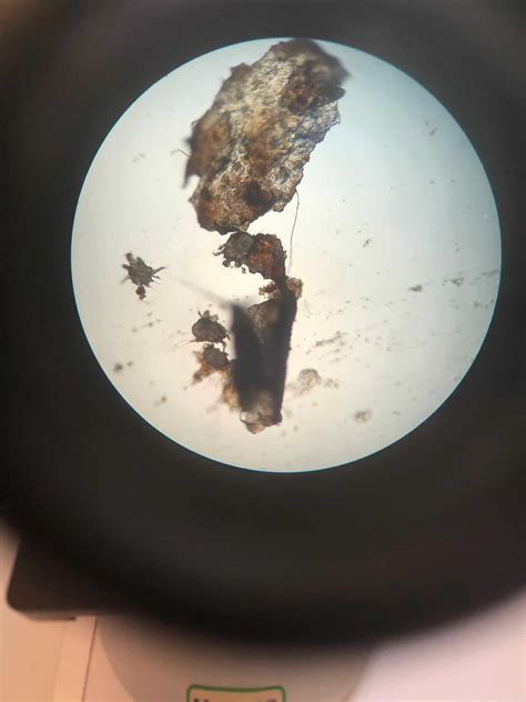 ear mites louth vets