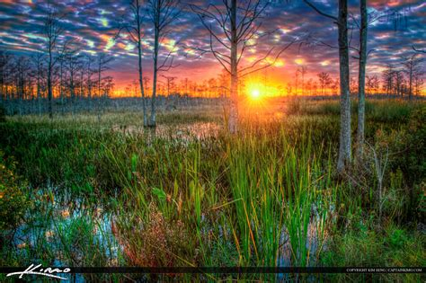 sunset at sw palm gardens wetlands