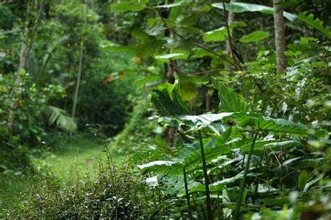 ternyata  desa konservasi  yogyakarta good news