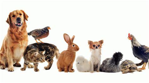 adoptar  apadrinar animales hogarmania