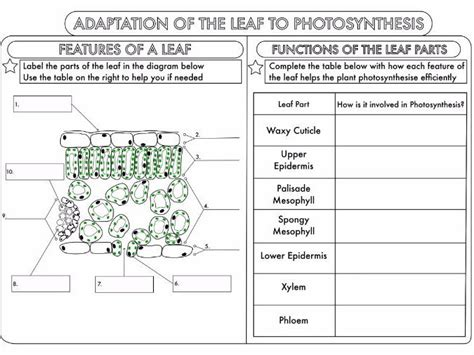 adaptation worksheets for middle school worksheets for all