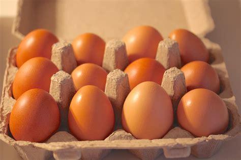 organic eggs roadside retailing breaking new ground in zone 6