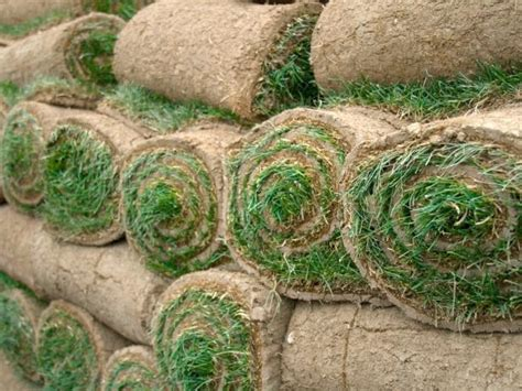 How To Resod A Lawn
