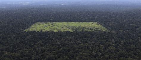 Amazon Rainforest Conservation Peru Volunteer Overseas