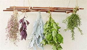 Hanging Herb Drying Rack