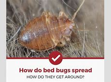 how do bed bugs spread 28 images bedbugs may spread
