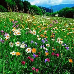 Garten Blumen Bilder : blumenwiese 500 g garten pinterest blumenwiese blumen und wiese ~ Whattoseeinmadrid.com Haus und Dekorationen