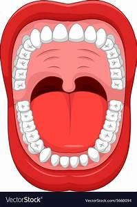 Parts Of Human Mouth Open Mouth Royalty Free Vector Image