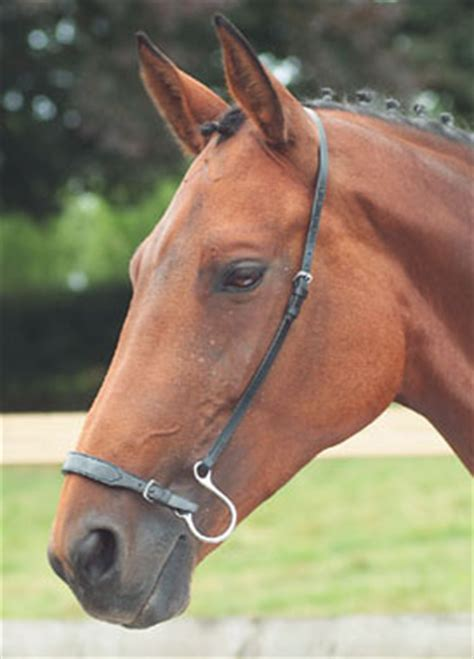 kineton noseband nosebands bridles accessories