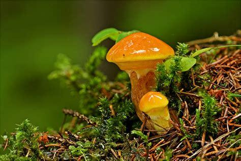 butterpilze foto bild pflanzen pilze flechten
