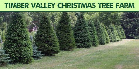 best 28 valley christmas tree farm clayton valley