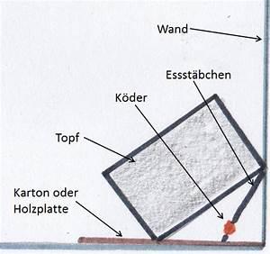 Lebendfalle Selber Bauen : rattenfalle selber bauen anleitung bdw app ~ A.2002-acura-tl-radio.info Haus und Dekorationen