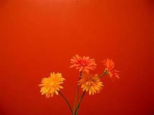 Orange Flowers Wallpaper HD Pictures   One HD Wallpaper ...