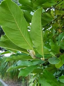 Was Ist Das Für Ein Baum : kann mir jemand sagen was das f r ein baum ist das foto ist von vorgestern gartenforum ~ Buech-reservation.com Haus und Dekorationen