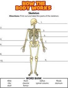 Skeletal System Worksheets Answers