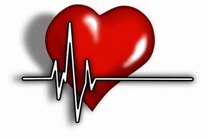 Herz Puls Ekg Systole Herzschlag Pixabay Heart