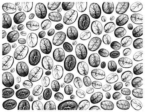 See more ideas about coffee illustration, coffee art, illustration. Hand Drawn Wallpaper Of Coffee Beans Background Stock Vector - Illustration of break, engraving ...
