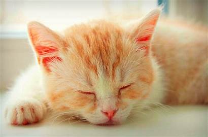 Tablet Kitten Iphone Wallpapersafari Sleeping Desktop