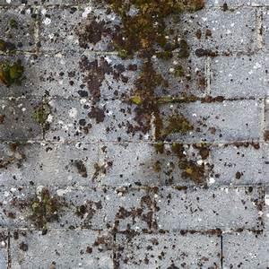 Traitement Anti Mousse : traitement anti mousse de fa ade ooreka ~ Farleysfitness.com Idées de Décoration