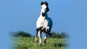 HD Wallpapers Widescreen 1080P 3D | Running horse hd ...