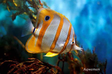 les shooters de la photographie poissons exotique vue par shooter et aqwaman