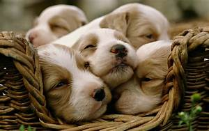 Puppies, In, A, Basket, Wallpapers, And, Images