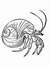 Crab Coloring Hermit Pages Printable sketch template