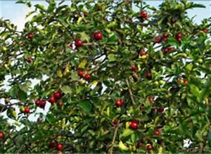 Schädlinge Am Kirschbaum : v gel aus dem kirschbaum vertreiben ~ Lizthompson.info Haus und Dekorationen