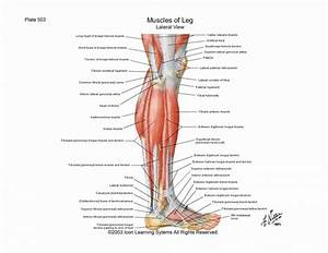 Diagram Of Knee Muscles And Tendons - Human Body Anatomy ...