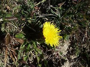 Blumen Im November : blumen bekommen im november mehr aufmerksamkeit fotos ~ Lizthompson.info Haus und Dekorationen