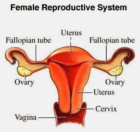 Kenapa Wanita Datang Bulan Dr Oz Indonesia Obat Melancarkan Menstruasi Dan Obat