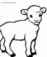 Coloring Sheep Lamb Animal Animals Farm Printable Drawing Simple Sunrise Sheets Found Coloringpages101 Sheeps Pencil Realistic Drawings Template Jesus Wolf sketch template