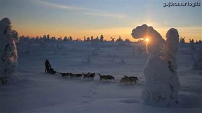 Sled Dog Husky Dogs Gifs Huskies Wolf