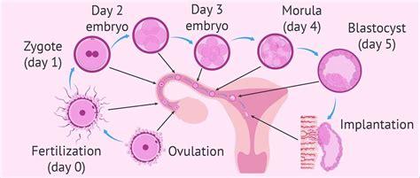 light pink after does light pink discharge pregnancy