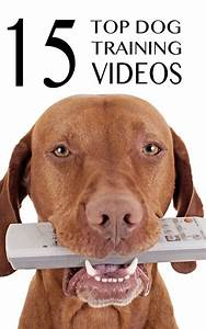 15 free top quality dog training videos selected by With best dog training sites