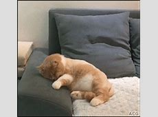 Best Cat Gifs of the Week #16 We Love Cats and Kittens