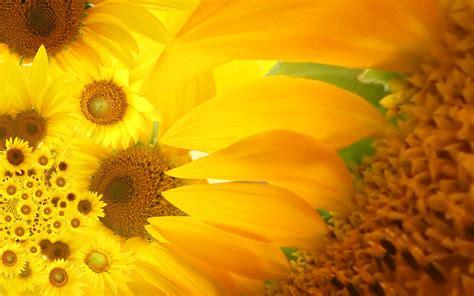 Mobile Wallpaper, Download, Flowers, Flower Fieldbeautiful