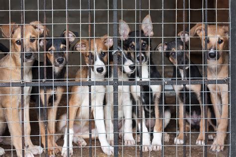 arizona mandates all dogs sold in pet stores to come from